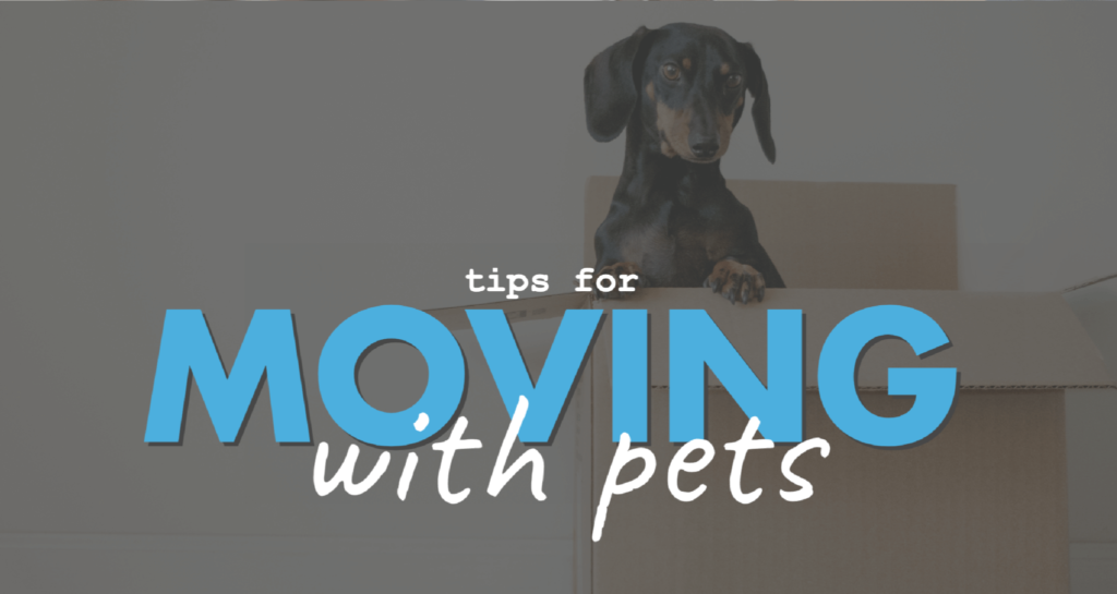 Moving-With-Pets-Header-ADSI-01
